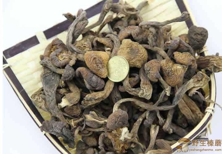 野生榛蘑保存